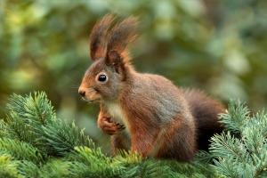 squirrel-619968_1920